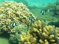 lifestyle-scuba-diving-inhaca-island